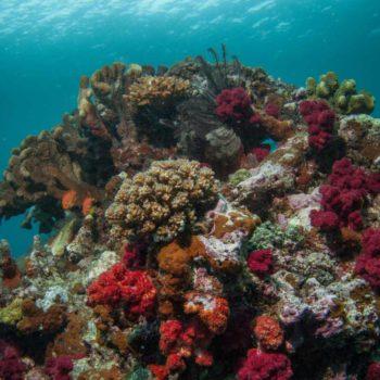12 Things to Do on Vanua Levu