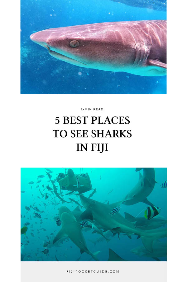 5 Best Places to See Sharks in Fiji