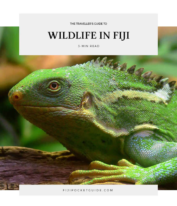 A Traveller's Guide to Wildlife in Fiji