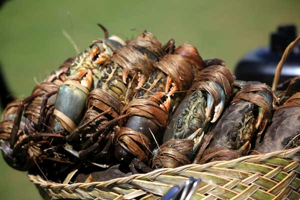mamanuca-islands-for-foodies-