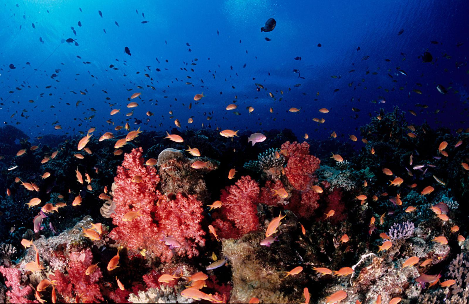 must-do-coral-coast-fiji