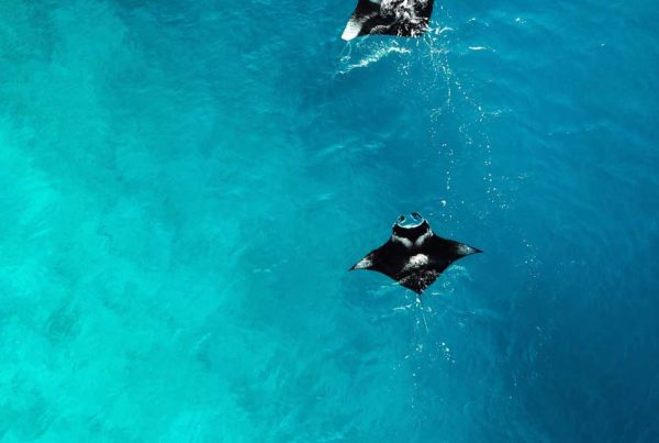 -must-dos-in-the-yasawa-islands