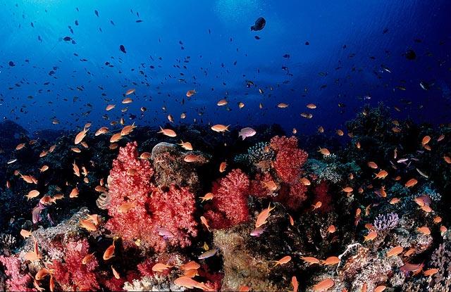 -must-do-coral-coast-fiji