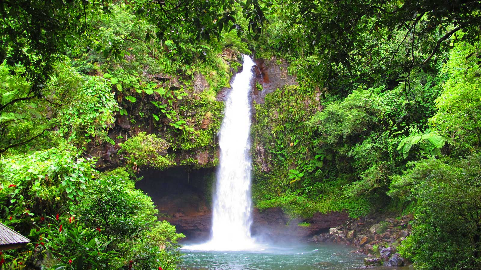 The Guide to Taveuni for Families