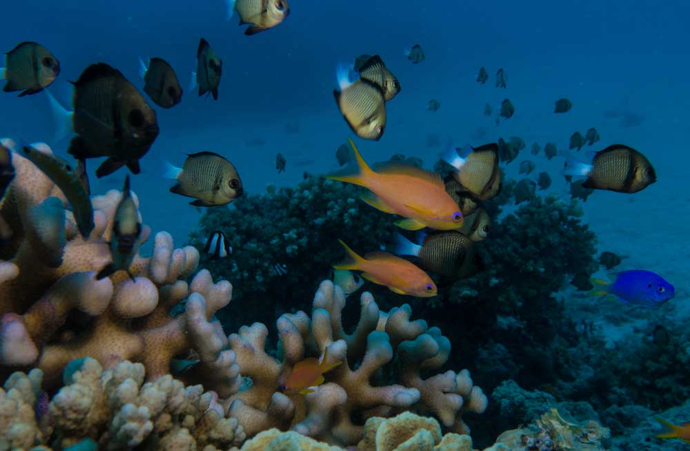 7 days-fiji-luxury-itinerary culture nature-Credit-Captain-Cook-Cruises