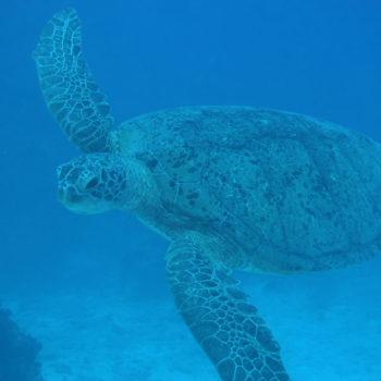 8 Luxury Activities in the Lomaiviti Islands
