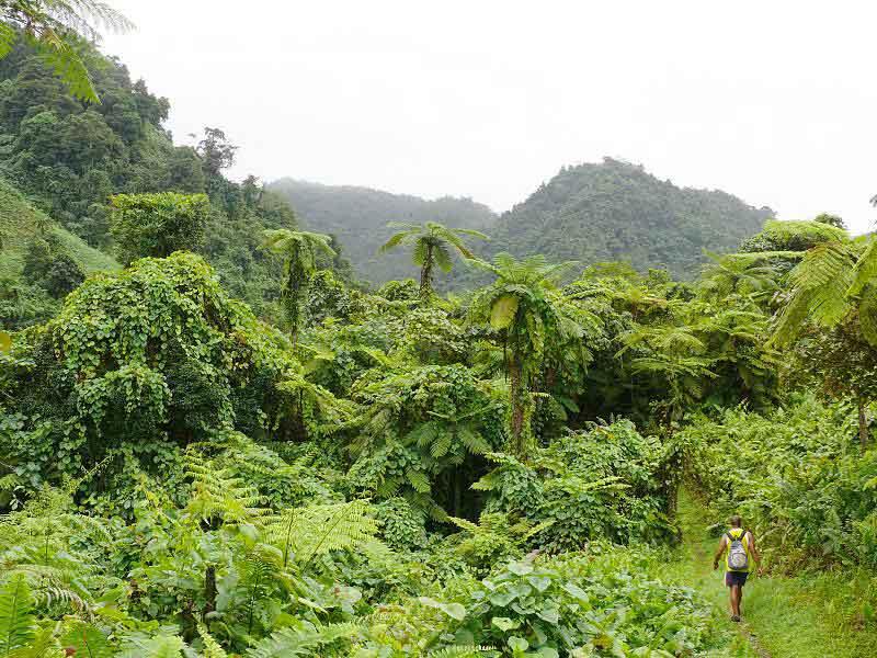 save-money-taveuni