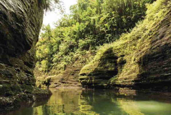 5 Best River Cruises in Fiji