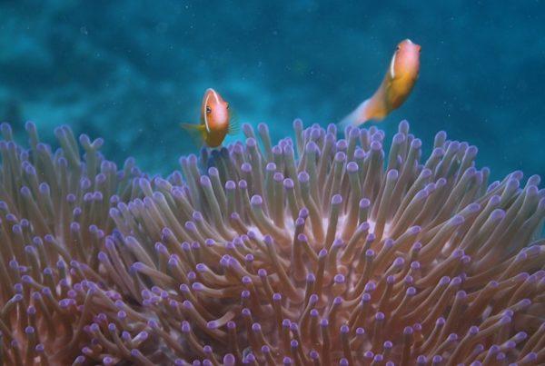10 Best Wildlife Cruises in Fiji
