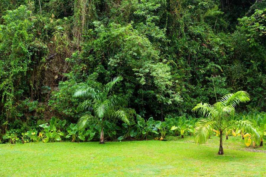 5 Best Walks in Suva