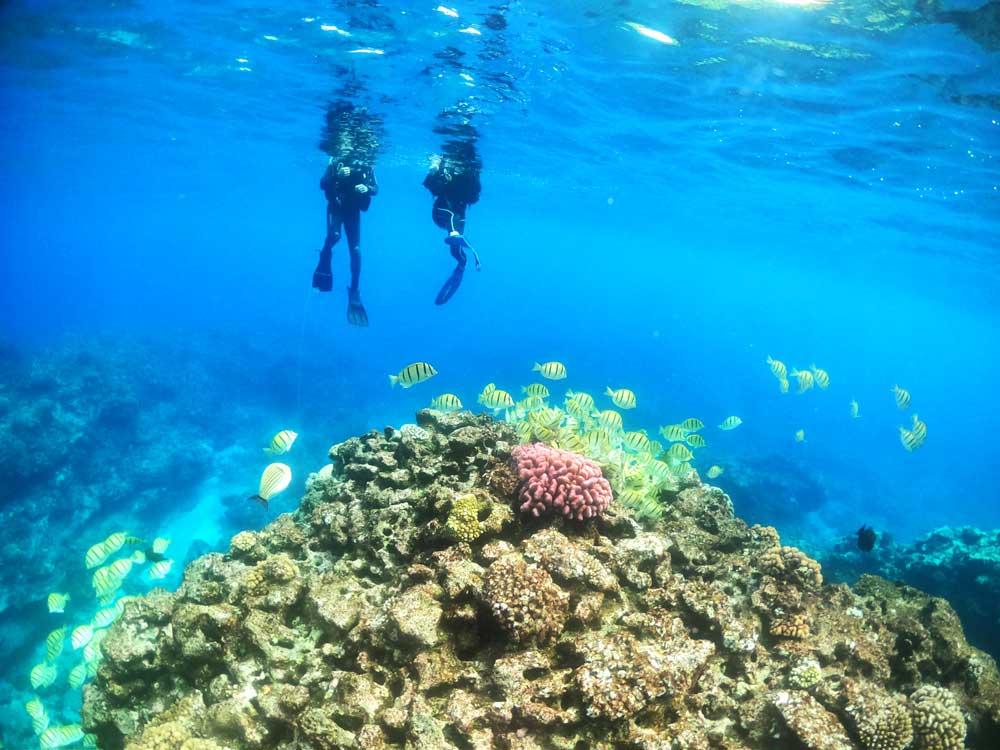 Scuba Diving Yellow Fish Coral Mandatory Credit To NiuePocketGuide.com