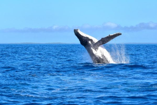 Where to See Whales in Fiji
