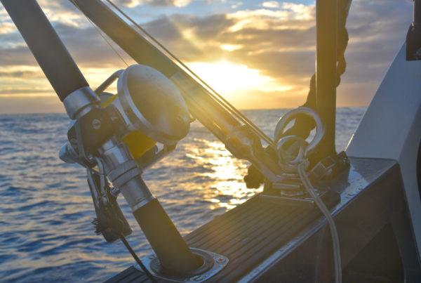 Best Fishing Trips in Denarau Island Fiji