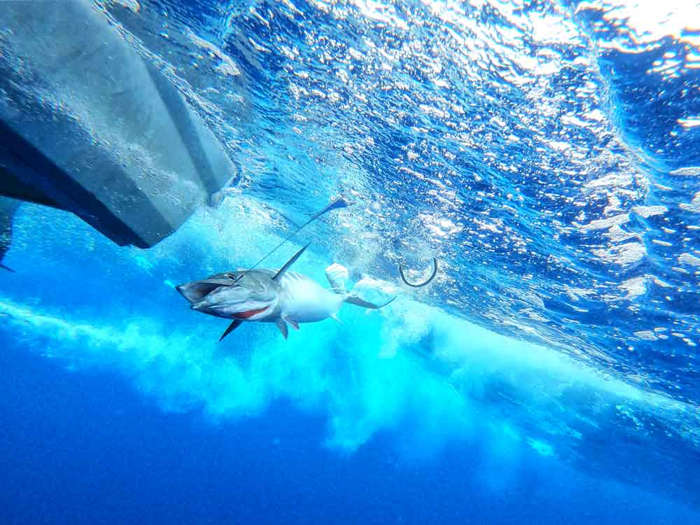 The complete guide to fishing in Fiji