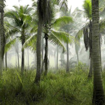 10 Best Hikes in Fiji