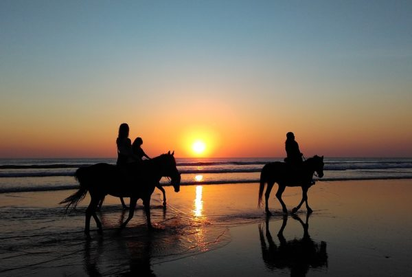 8 Best Horse Riding Tours in Fiji