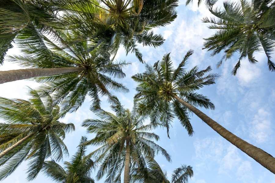 Palm Trees 3058728 1920 Pixabay Small