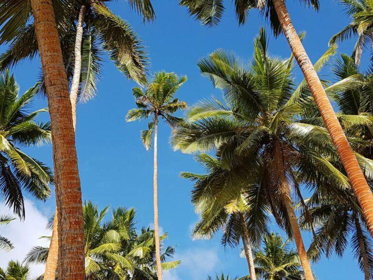 The Best Day Trips on Vanua Levu