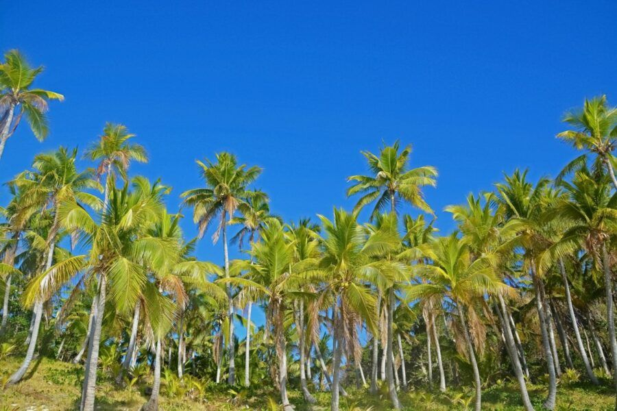 The Guide to Ecotourism in Fiji