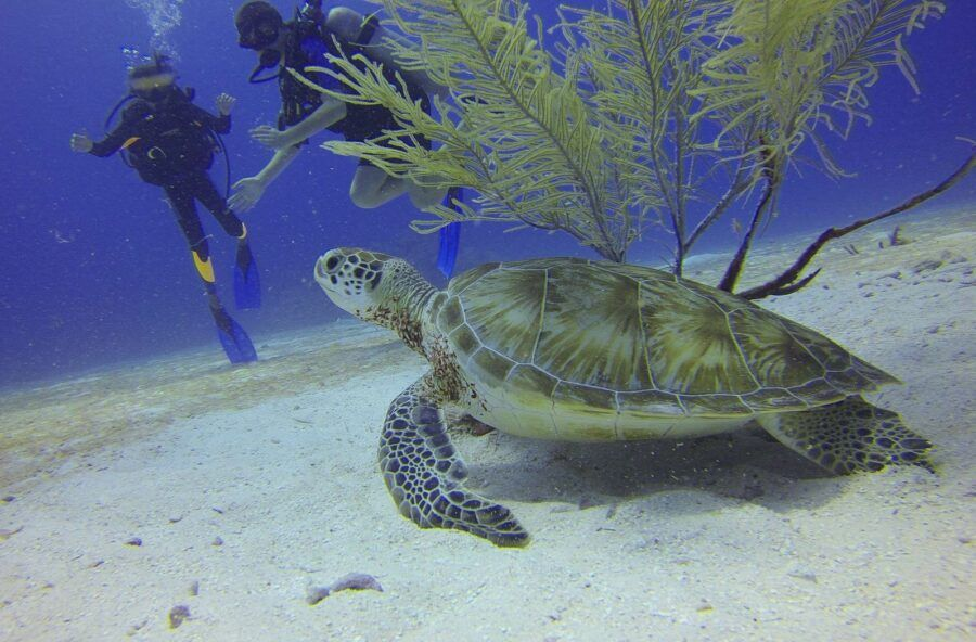 The Best Seasons for Seeing Wildlife in Fiji